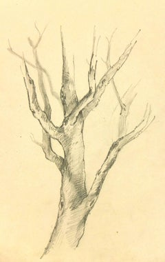 French Pencil Drawing of Tree