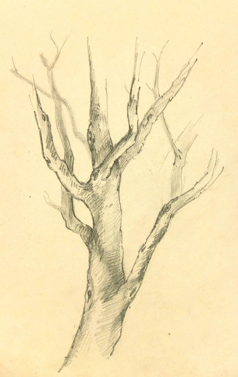 Unknown landscape art french pencil drawing of tree