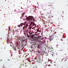 Martin Klimas, Red Rose, Exploding Flower, Photograph, Abstract Explosion