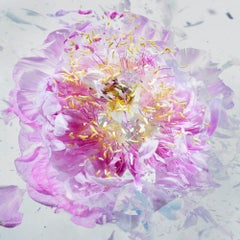 Martin Klimas, Exploding Pink Flower, Photograph, Abstract Explosion