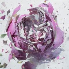 Martin Klimas, Purple Rose, Exploding Flower, Photograph, Abstract Explosion