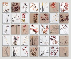 Prunus (Sold only in seasonal groups of 4 and 8)