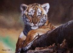 Bout de Choux (Bébé Tigre) / Little One (Baby Tiger)