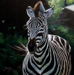 Zèbre / Zebra