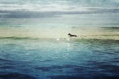 Zeb in the Sea