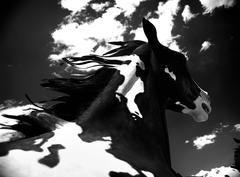 Cloud Horses