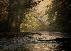 Brabyns Autumn