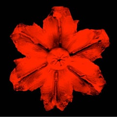 Power Flower N - 1 (Red on Black)