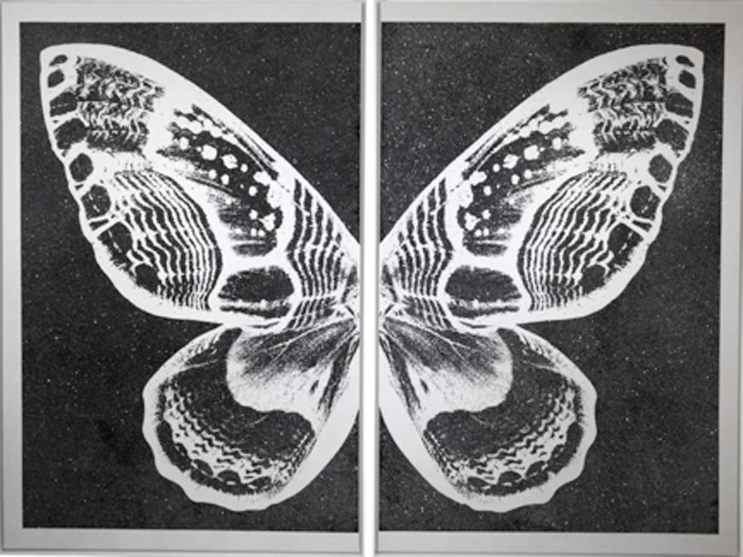 Hybrid Pearl Butterfly on Black