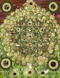 Okra Mandala
