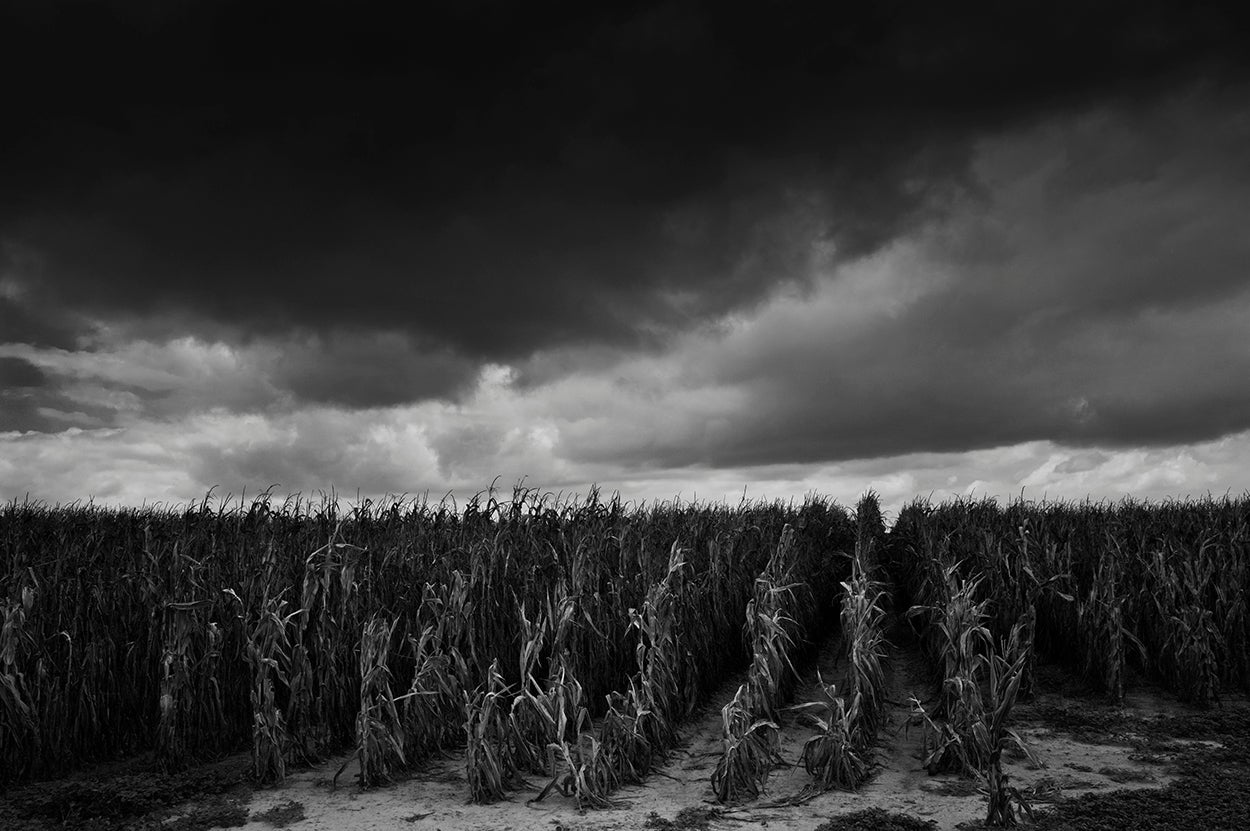 Debbie Fleming Caffery Black and White Photograph - Dead Cornfield