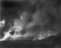 Burning Cane #6