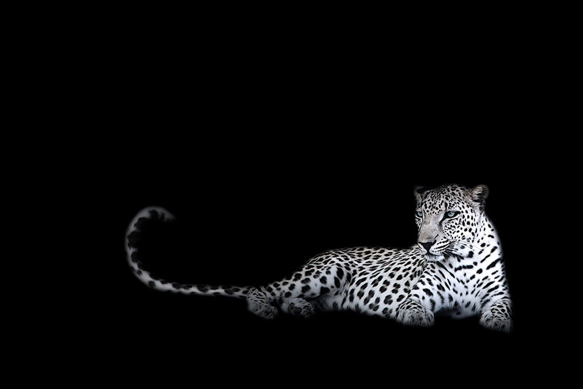 Joe Zammit-Lucia Black and White Photograph - Imagine