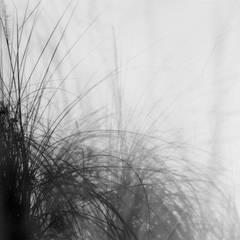 True Grass (362434.1C.11)