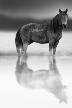Belle Starr- Contemporary Black and White Photography of Wild Horses