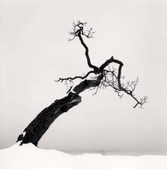 Kussharo Lake Tree, Study 4, Kotan, Hokkaido