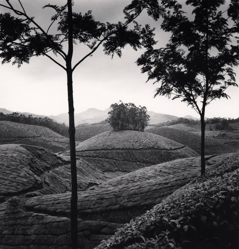 Michael Kenna Black and White Photograph - Tea Estates, Study 1, Munnar, India, 2008