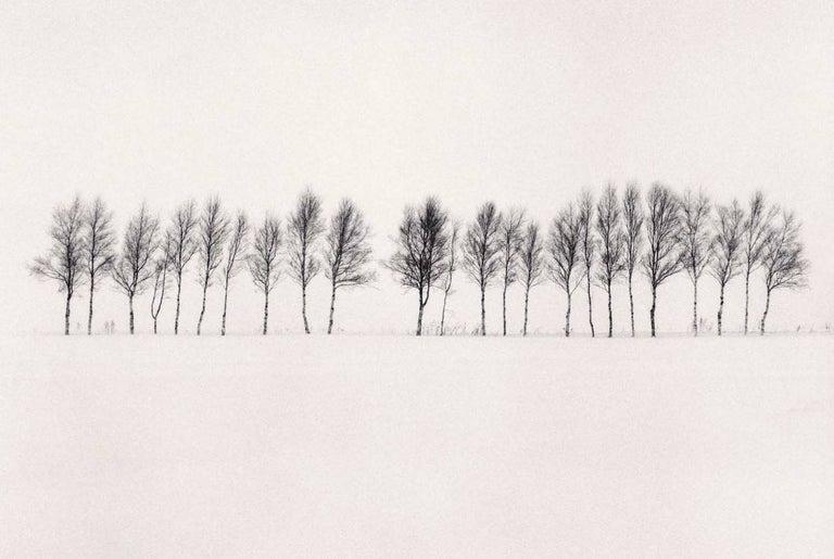 Michael Kenna Black and White Photograph - Twenty Four Trees, Abashiri, Hokkaido, Japan, 2005