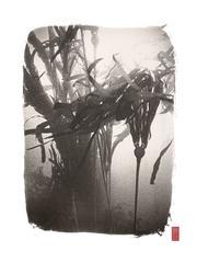 K67 ~ Bull Kelp
