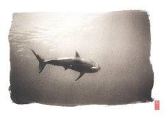 K87 ~ White Shark