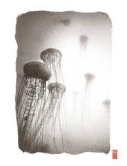 K126 ~ Sea Nettles
