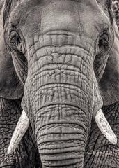 Portrait of an Elephant III