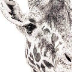 Giraffe 7 ~ Eye to Eye