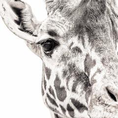 Giraffe 7 ~ Eye to Eye