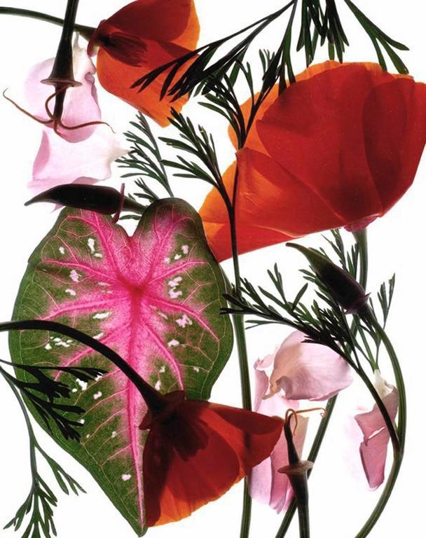 Carol Henry Color Photograph - California Garden