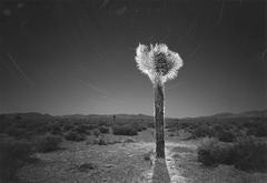 Desert Fantasy, Nevada