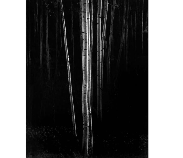 Ansel Adams - Aspens, Northern New Mexico (Vertical) 1
