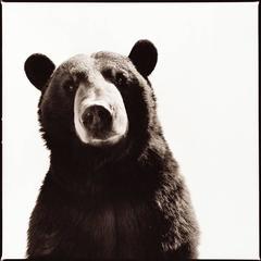 Black Bear I