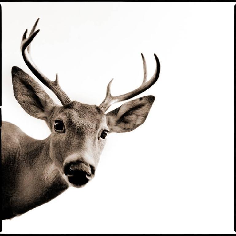 Nine Francois Black and White Photograph - Deer II