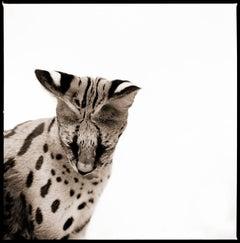 Serval II