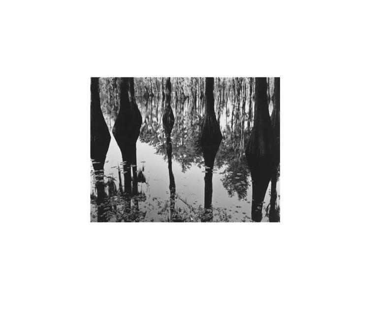 Brett Weston Black and White Photograph - Swamp, North Carolina