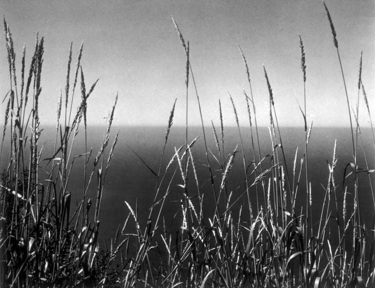 Grass Against Sea 2