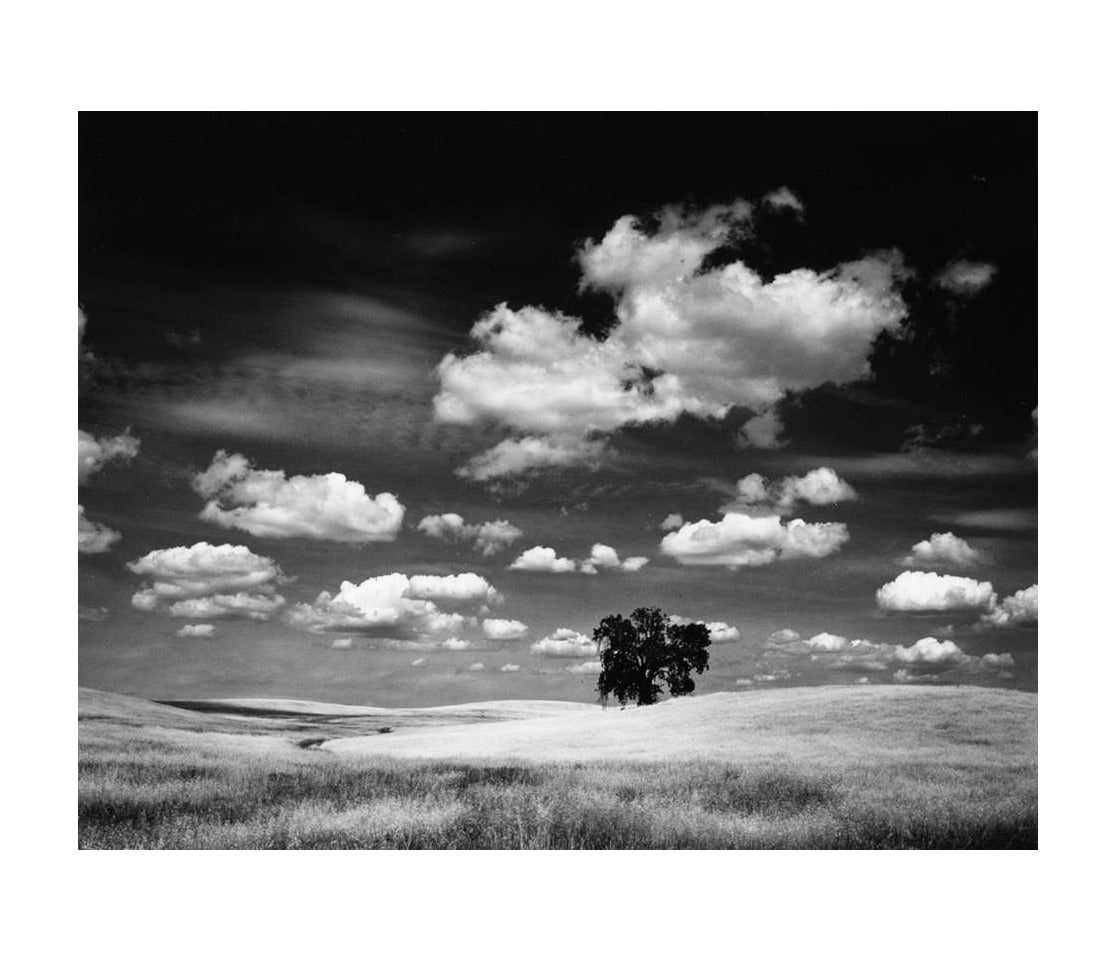 Roman Loranc Black and White Photograph - Oak and Clouds