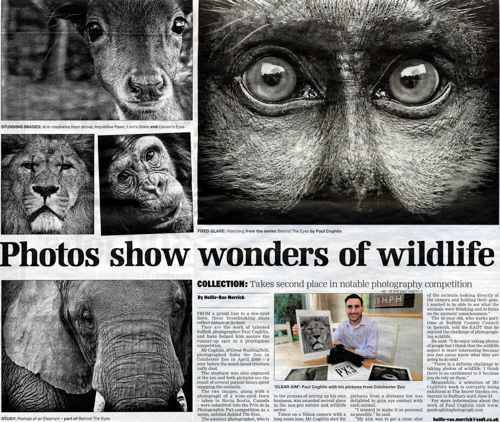 Lion's Stare - Black Portrait Photograph by Paul Coghlin