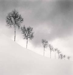 Nine Silver Birches, Shibetsu, Hokkaido, Japan, 2009