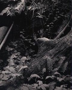Untitled ~ Ferns and Log