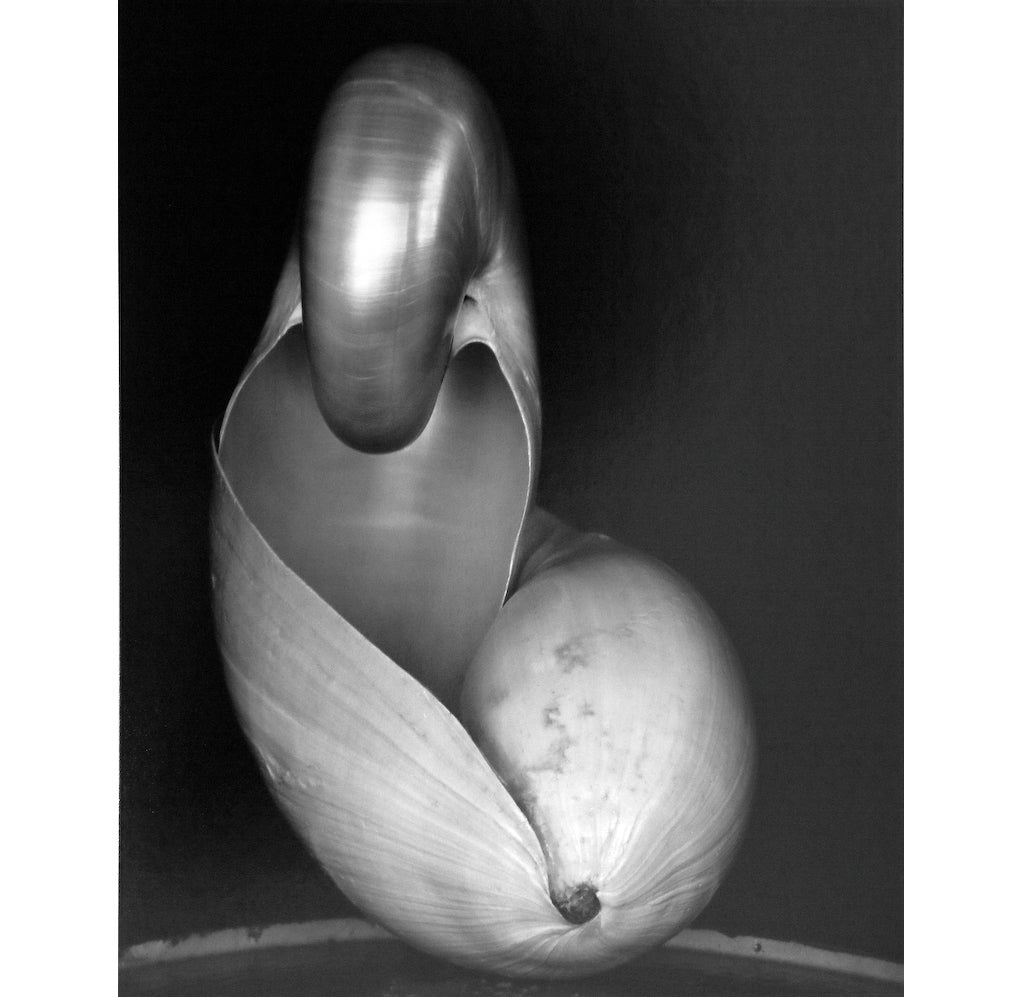 Edward Weston - 14S ~ Two Shells 1