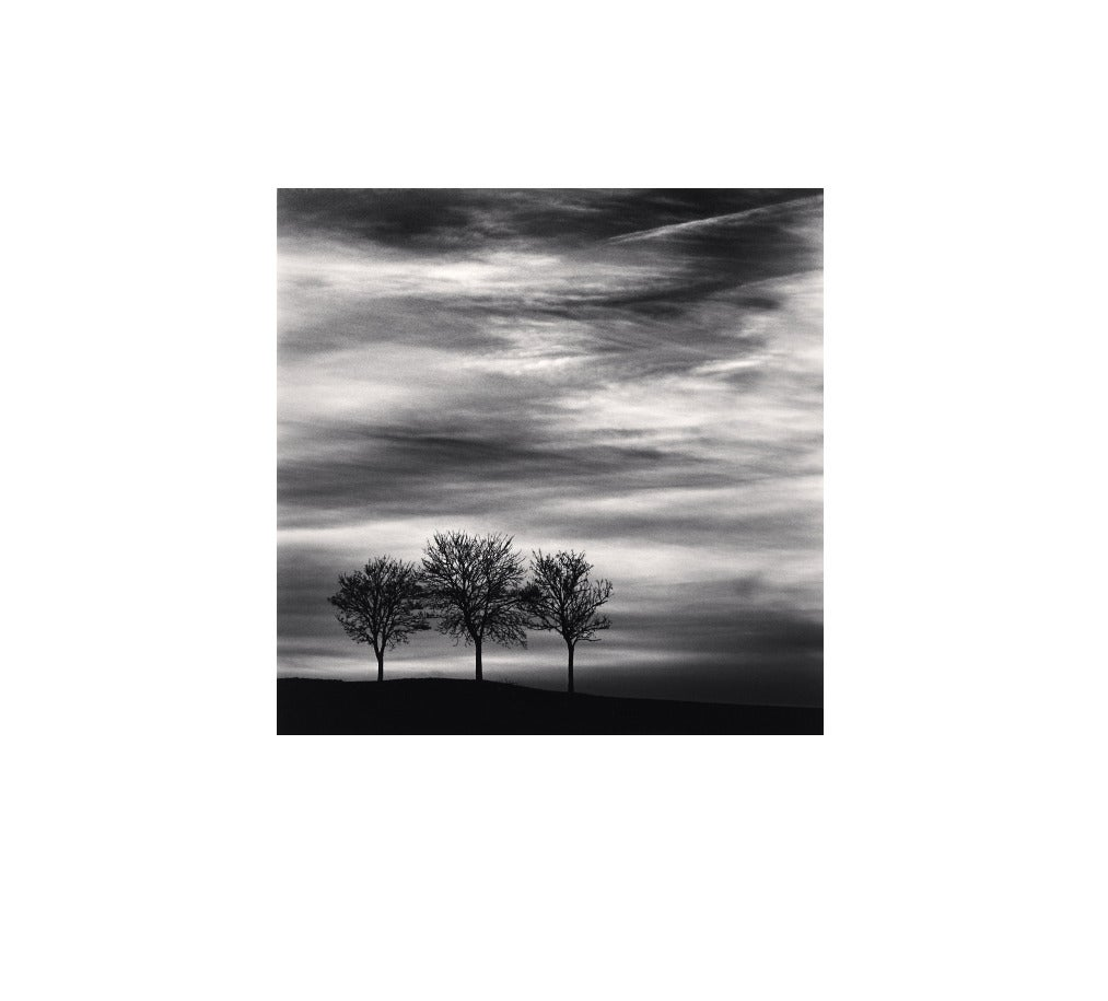 Three Trees at Dusk, Fain, Les Moutiers, Bourgogne, France, 2013