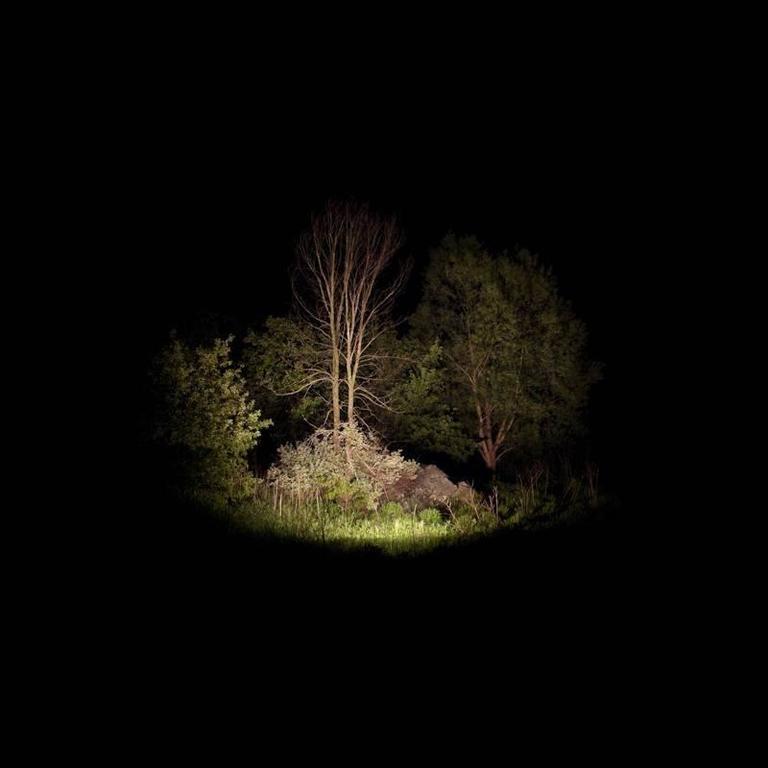 Toile #3 (Black Locust), 2008