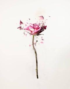 Rose Explosion 1