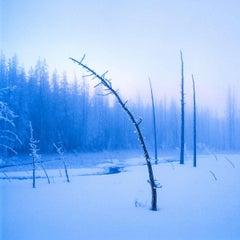 Frozen Tree on Twilight
