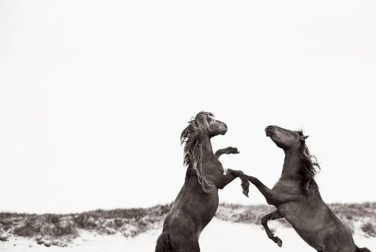 Drew Doggett Portrait Photograph - The Dance