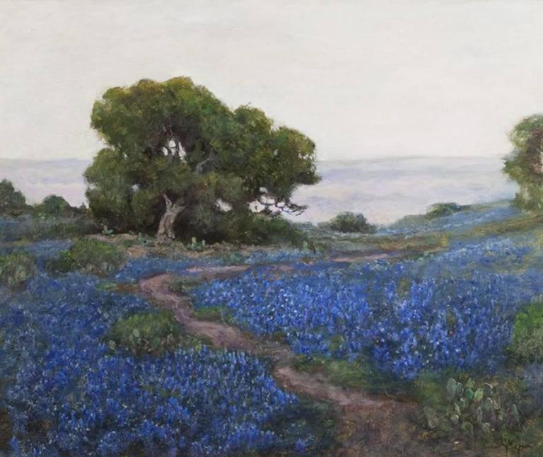 Bluebonnets, Misty Morning, San Antonio, Texas