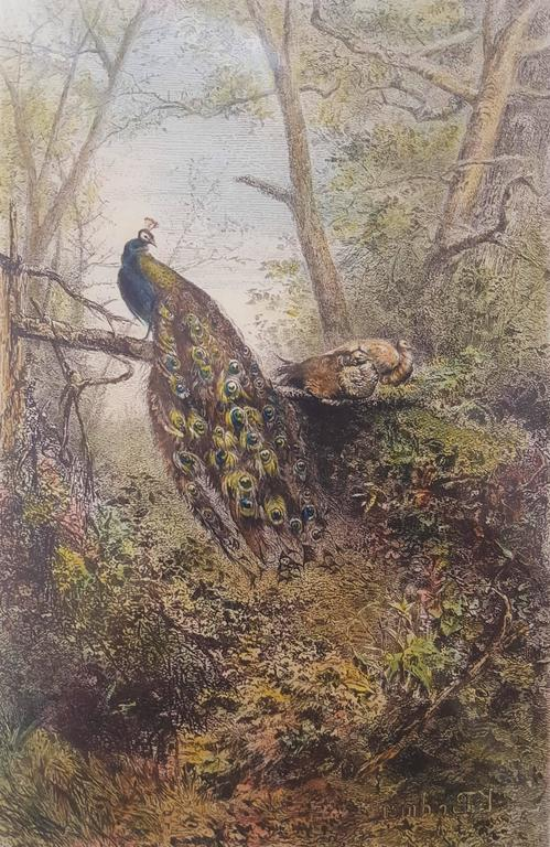 Karl Bodmer Animal Print - Peacocks on a Bough