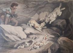 Hunting the Tiger Cat