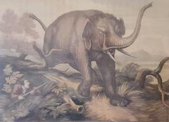 Hunted Elephant